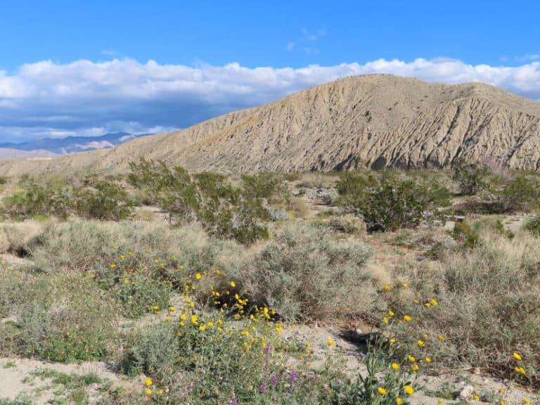 Exploring the desert on a day trip from Palm Springs California