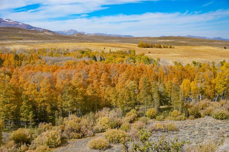 Fall in the Eastern Sierra is beautiful
