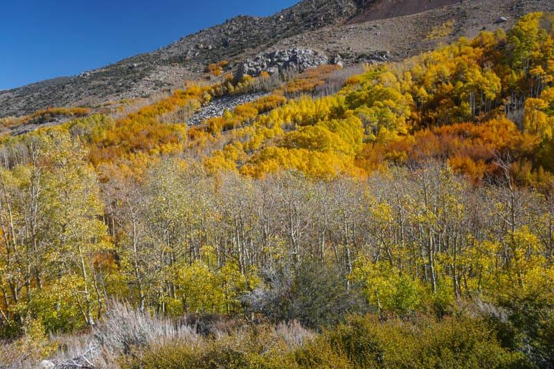 Fall colors Bishop Creek Canyon California