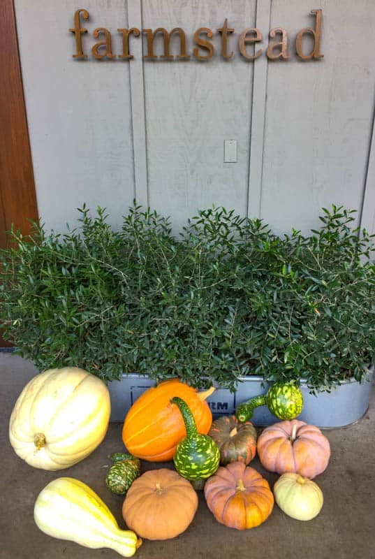 Fall display at Farmstead in saint Helena in Napa Valley in November