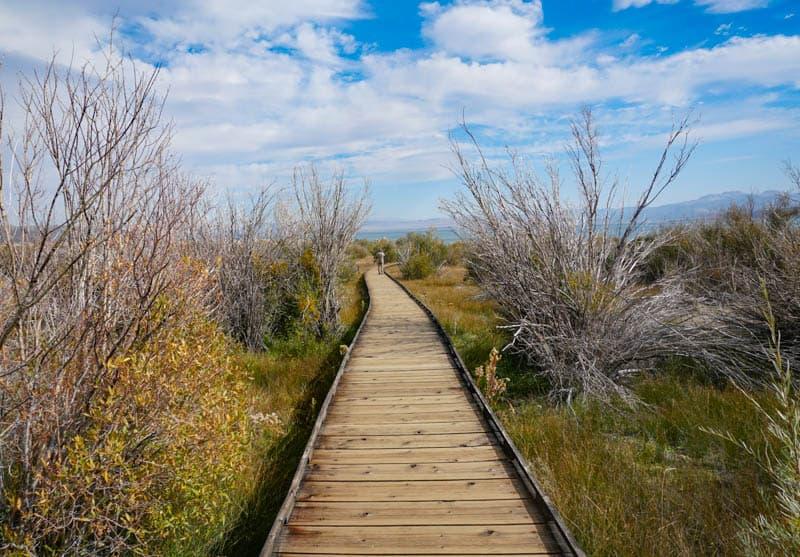 Boardwalk Trail at Mono Lake County Park California