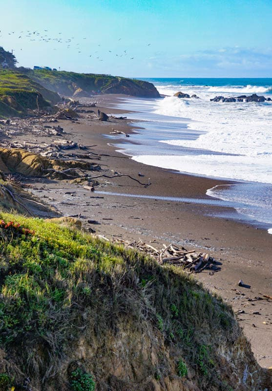 Lots of driftwood on Moonstone Beach in Cambria