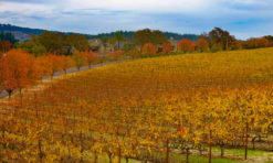 Napa Valley in November: The Ultimate Guide!
