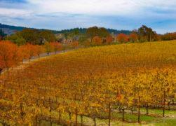 Napa Valley in November: The Ultimate Guide!