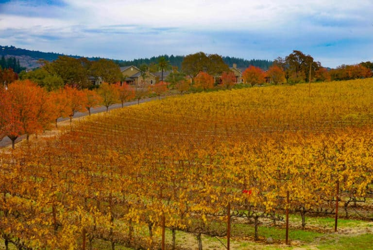 Napa Valley in November
