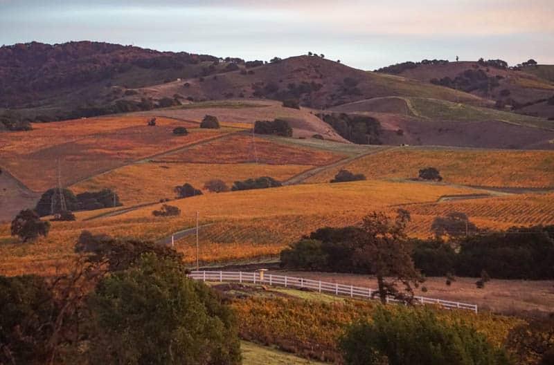 Napa Vineyards in November