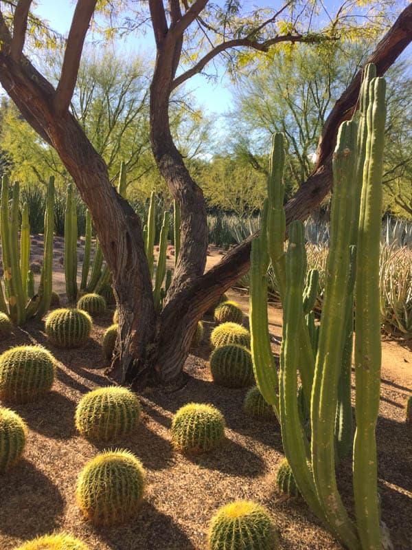 Sunnylands Desert Garden Rancho Mirage California