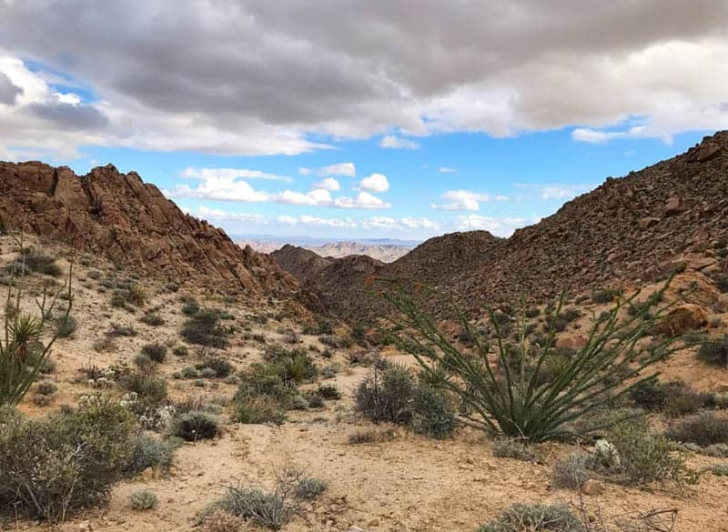 A view from the Lost Palms Oasis Trail in Joshua Tree National Park California
