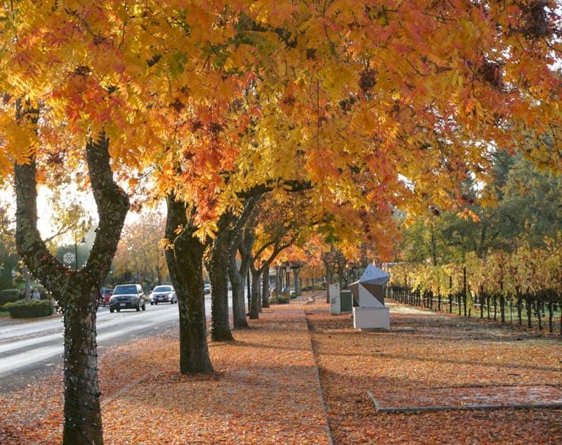 Yountville in Napa Valley California in November