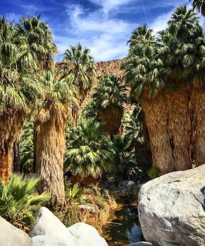 49 Palms Oasis Joshua Tree NP California