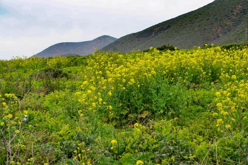 Big Sur California Spring wildflowers