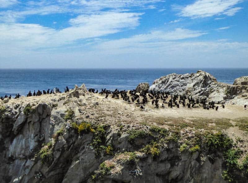 Bird Island Point Lobos California
