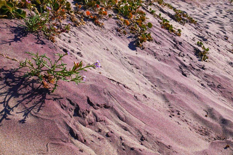 Purple sand at Pfeiffer Beach in Big Sur