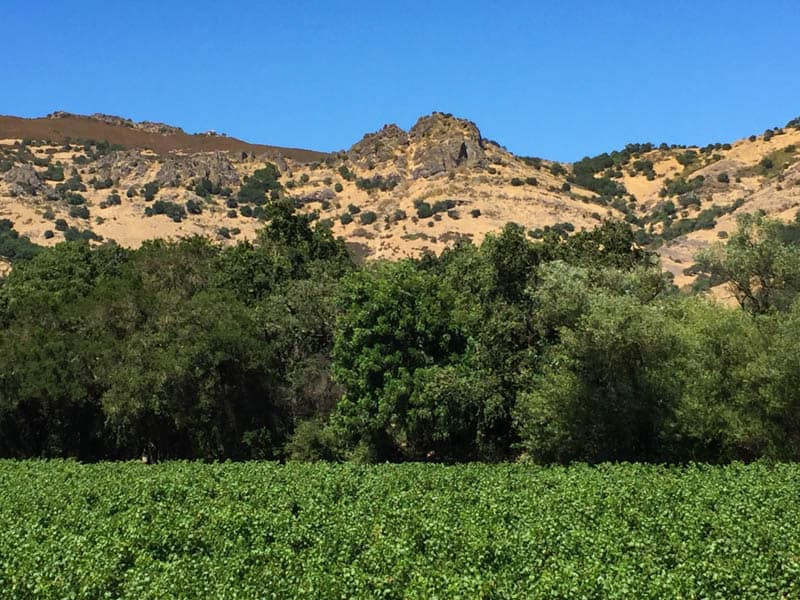 View from Stag's Leap Wine Cellars Napa Valley California