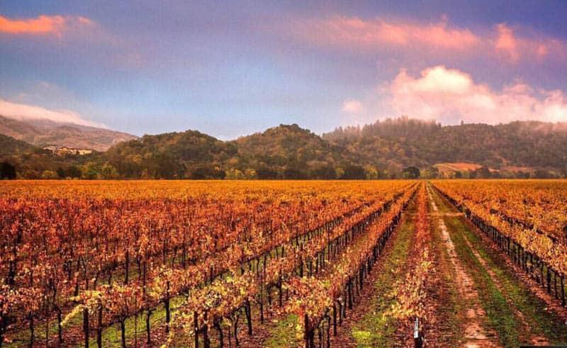 Sterling Vineyards Napa Valley California