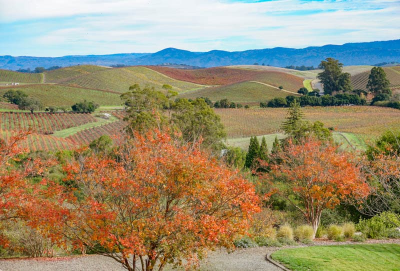 View from Artesa Winery in Napa Valley California