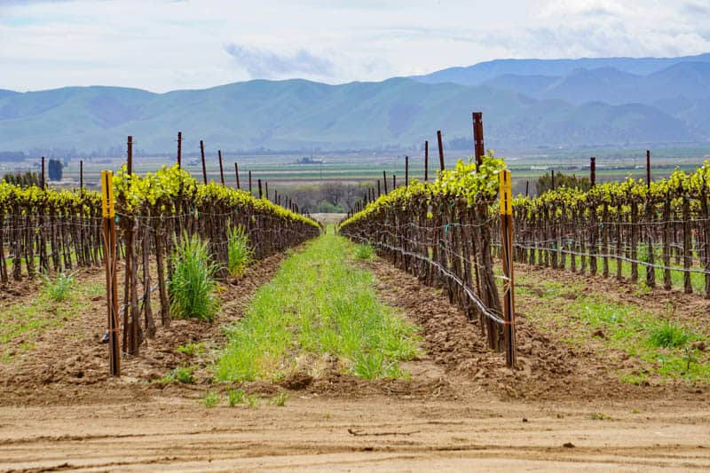 Vineyards near Soledad California