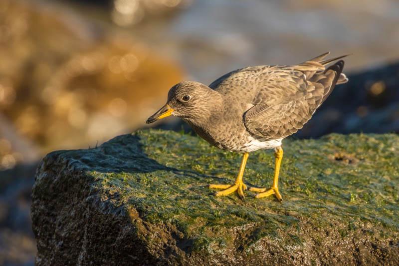 Water bird at Morro Bay California
