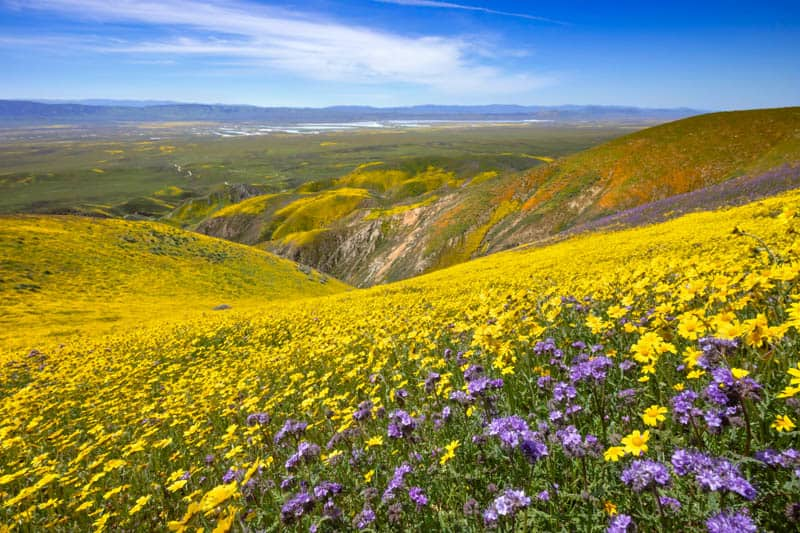 Wildflower bloom at Carrizo Plain National Monument in Central California