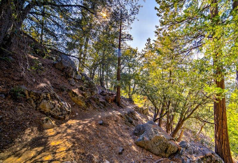 Hiking trail in Idyllwild