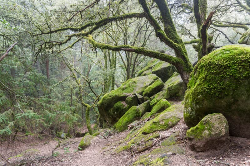 Otherworldly landscape in Castle Rock State Park, Santa Cruz, California