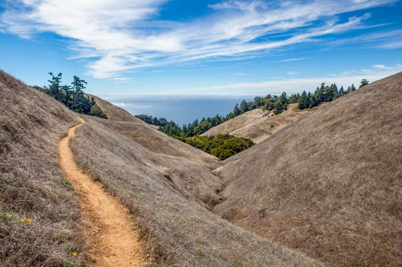 A trail in Mount Tamalpais State Park in California