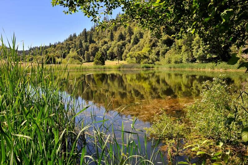 Pond in Palomar Mountain State Park California
