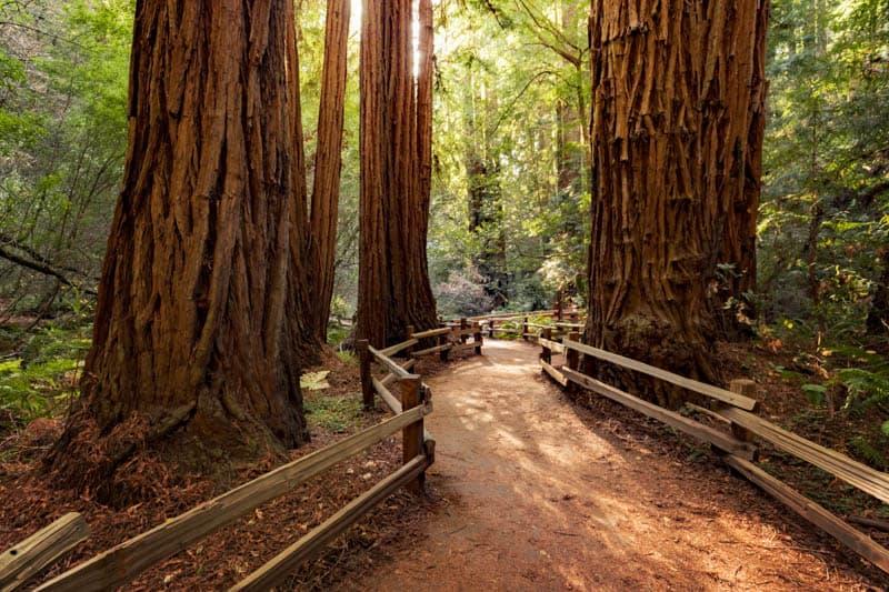 Beautiful trail in Muir Woods National Monument California