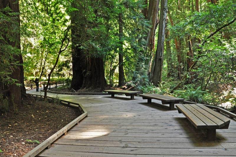 Boardwalk Trail through Muir Woods in Northern California