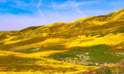 Carrizo Plain National Monument in San Luis Obispo County: The Complete Guide!