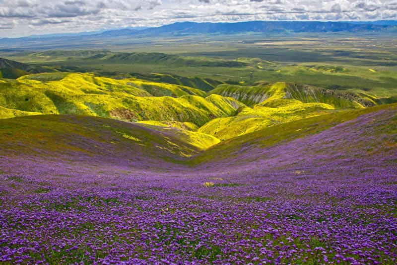Carrizo Plain National Monument in Spring