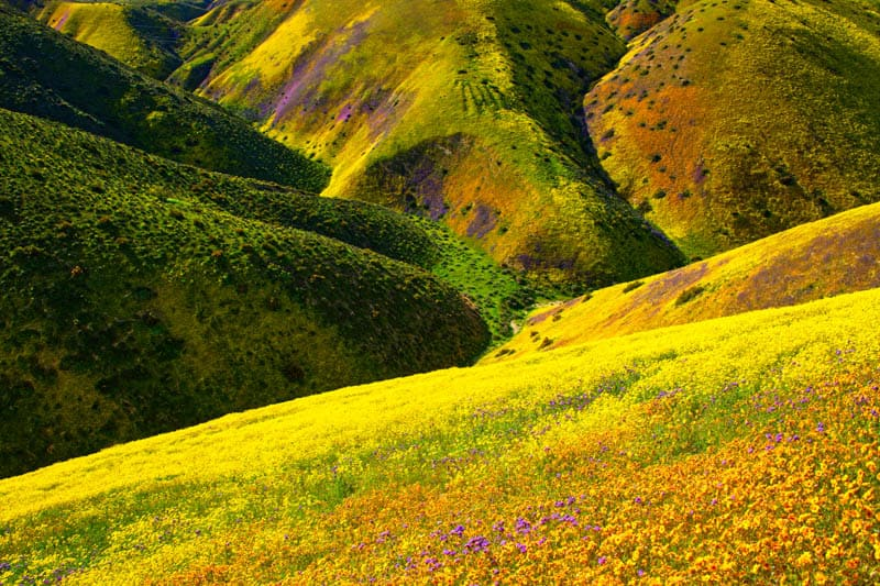 Spring Wildflower Bloom in Carrizo Plain National Monument