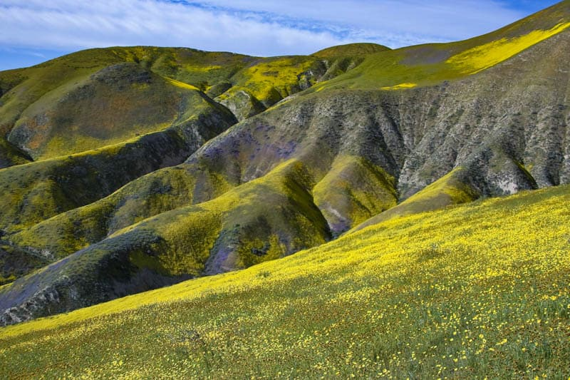 Carrizo Plain Wildflowers