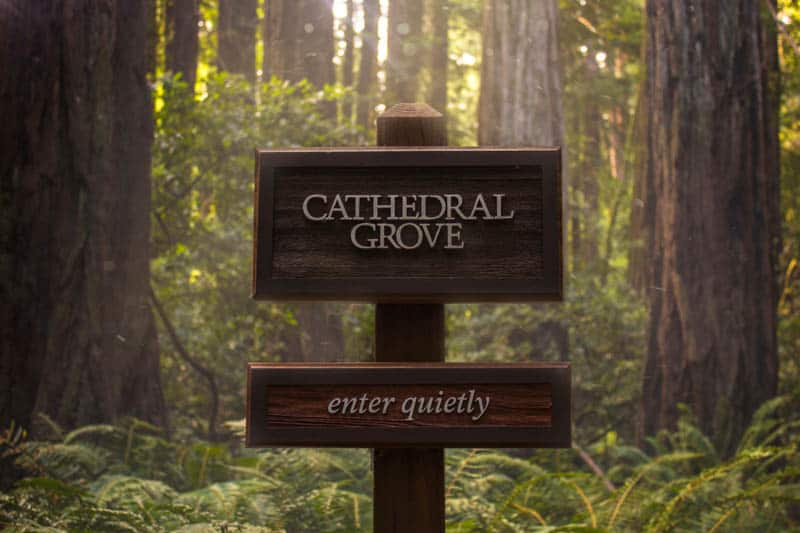 Cathedral Grove in Muir Woods, California