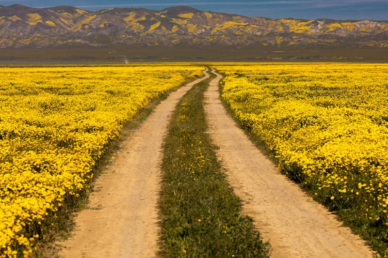 Dirt Road in Carrizo Plain National Monument in Central California