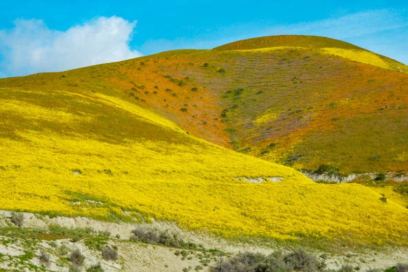 Carrizo Plain in Central California During Spring Wildflower Bloom