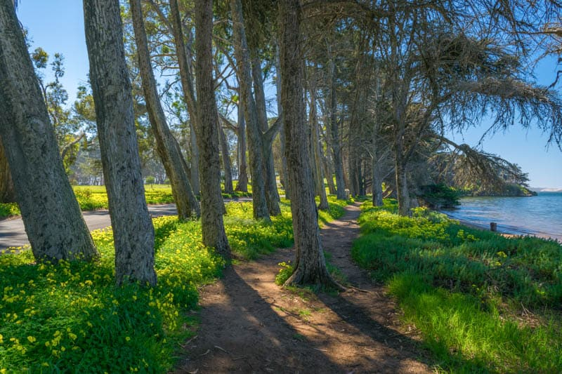 Walking trail in Morro Bay State Park California