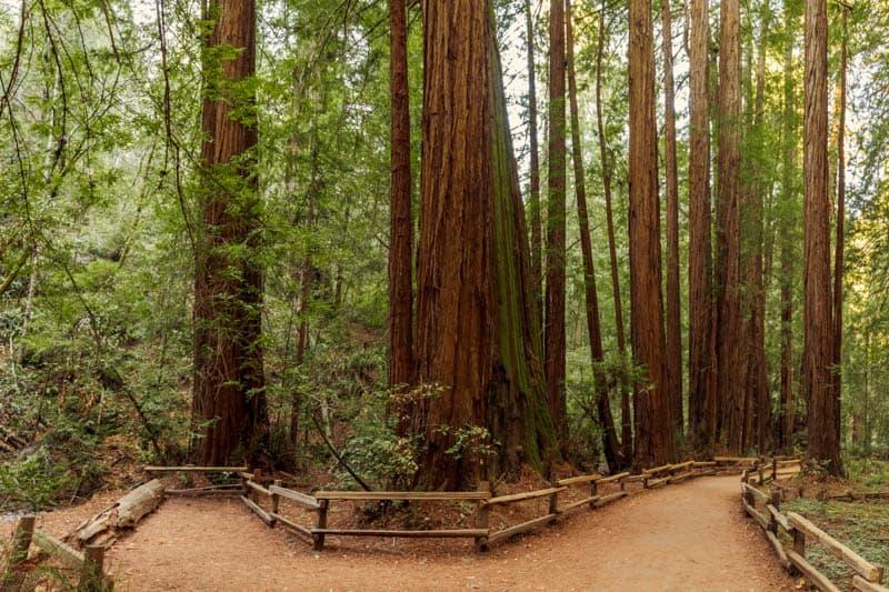 Muir Woods California Hiking Trail