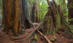 Muir Woods National Monument: Best Hikes (+ Tips for Visiting!)