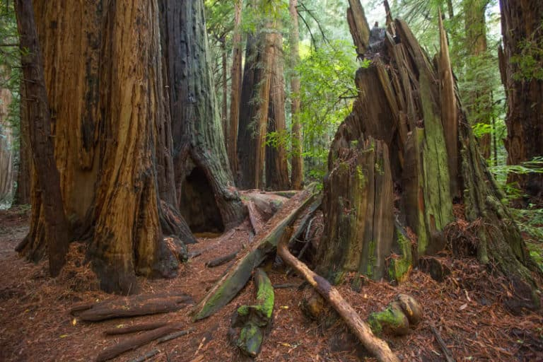 Muir Woods National Monument is a must-visit in California!