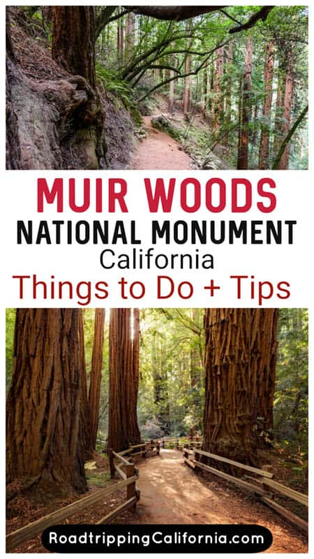 Discover the best hikes and other things to do in Muir Woods National Monument north of San Francisco in California. Old-growth redwoods + wildflowers and wildlife!