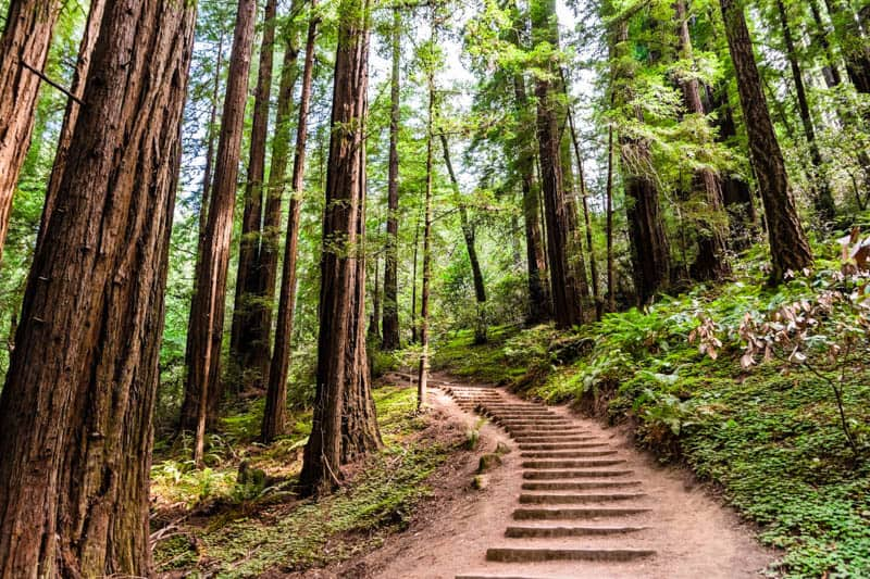 Muir Woods National Monument Best Hikes Tips For Visiting Roadtripping California
