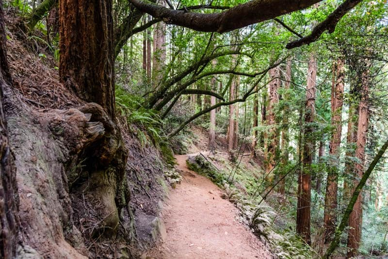 Trail in Muir Woods national Monument California