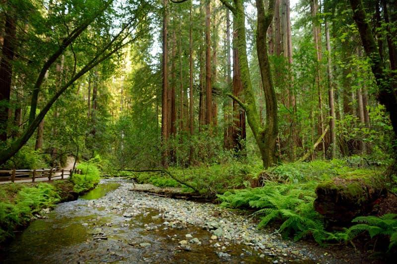 Landscape in Muir Woods California