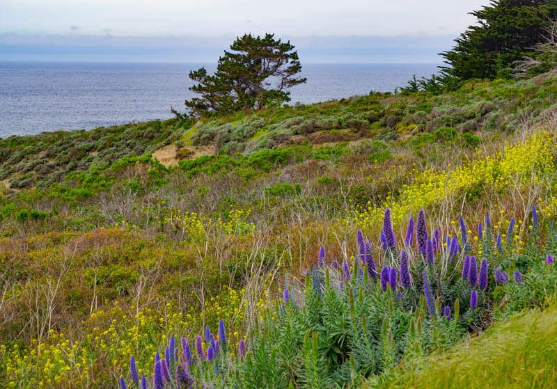 Wildflowers Garrapata State Park California