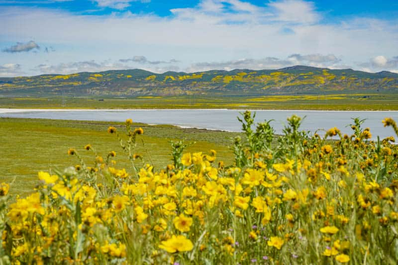 Wildflowers near Soda Lake in Carrizo Plain NM