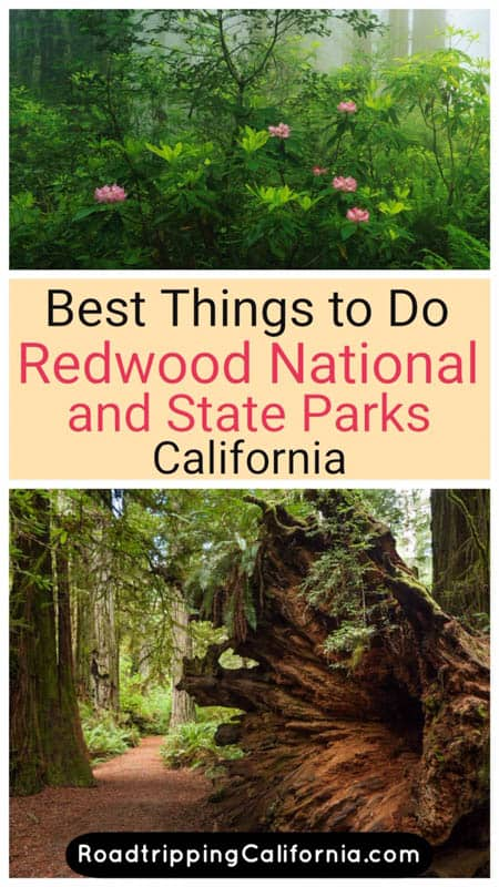 Discover the best things to do in Redwood National and State Parks on the Northern California Coast, from epic hikes to scenic drives and wildlife viewing!