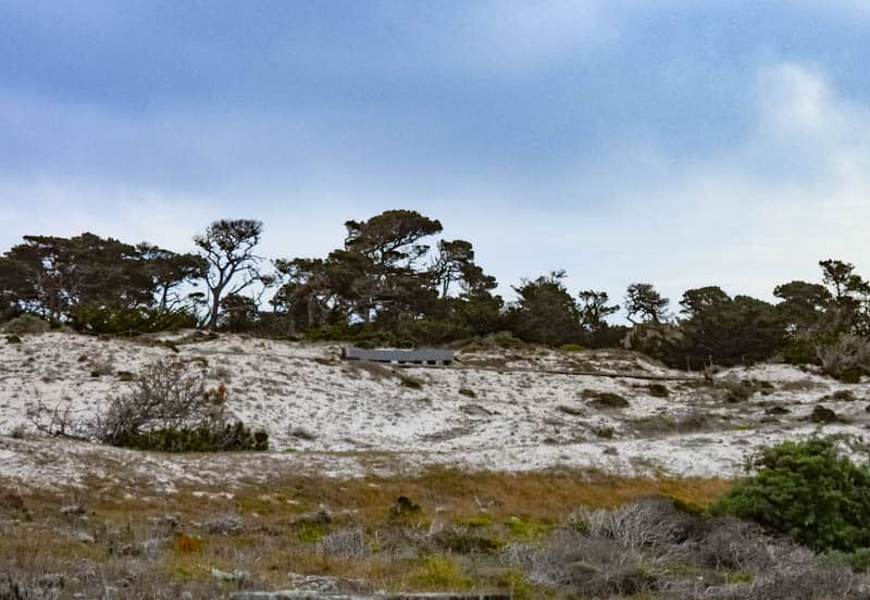 Coastal sand dunes at Asilomar in Pacific Grove, California
