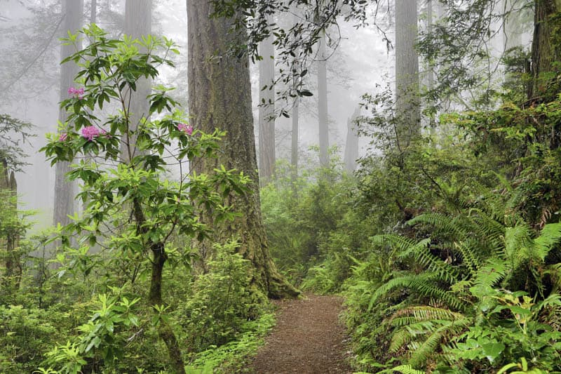 Beautiful views along the Damnation Creek Trail in Del Norte Coast Redwoods State Park California