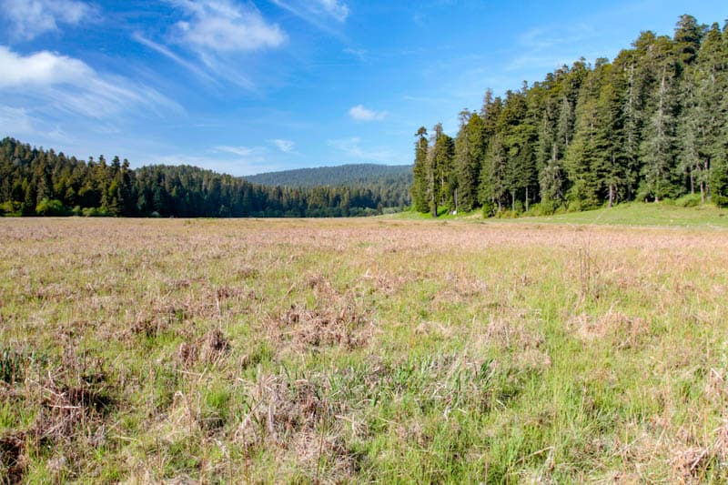 A view of redwoods and prairie from the Elk Prairie Trail in Prairie Creek Redwoods SP in California
